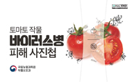 토마토 작물 바이러스병 피해 사진첩
